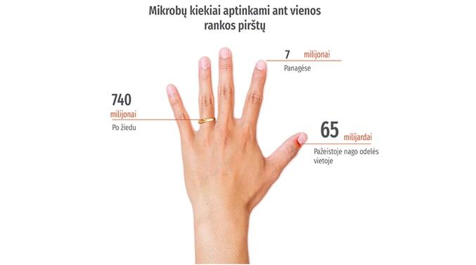 Mikrobų kiekiai aptinkami ant vienos rankos